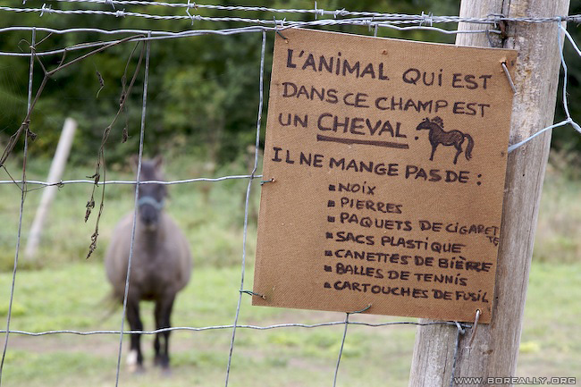 Attention, cet animal est un cheval ! C'est un peu dingue de le préciser, mais j'imagine que si le propriétaire l'a fait, c'est que des couillons ont donné n'importe quoi à manger à ces chevaux